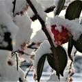 写真: 雪じゃ…