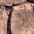 駿府城天守台発掘調査 石垣の刻印(7)
