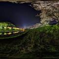 みなみの桜 夜桜 360度パノラマ写真  (南伊豆町下賀茂温泉)