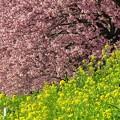 南伊豆町下賀茂温泉「みなみの桜」(11)