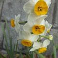 Photos: もう咲いています