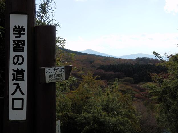 函南原生林入り口