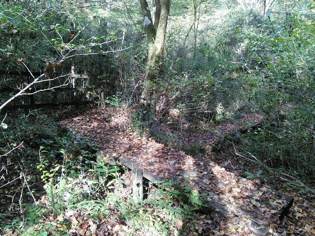 落ち葉に埋もれた木道