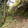 林道唐沢線に沿った林道