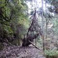倒木が電線に引っ掛かっている