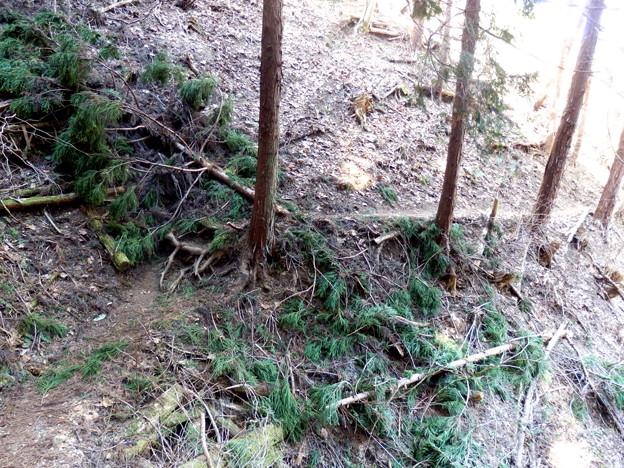 倒木もあって適度にスリルが味わえます^^