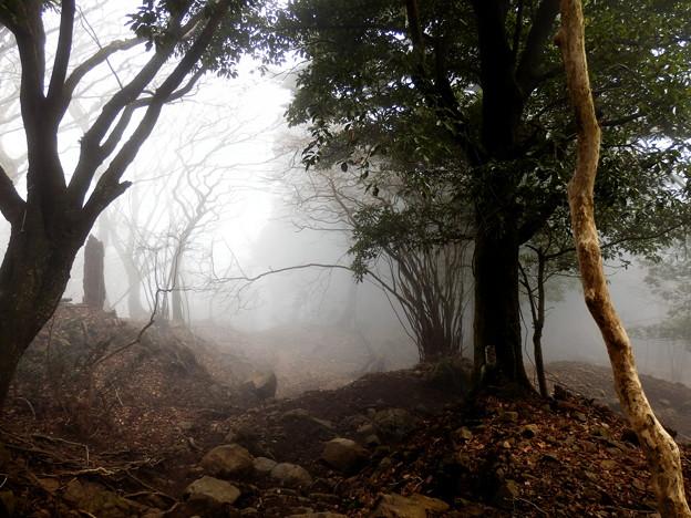 また霧が出てきた