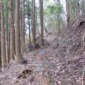 清川村役場近くの登山道入り口から入ります