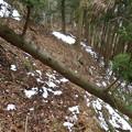倒木を乗り越え下山^^