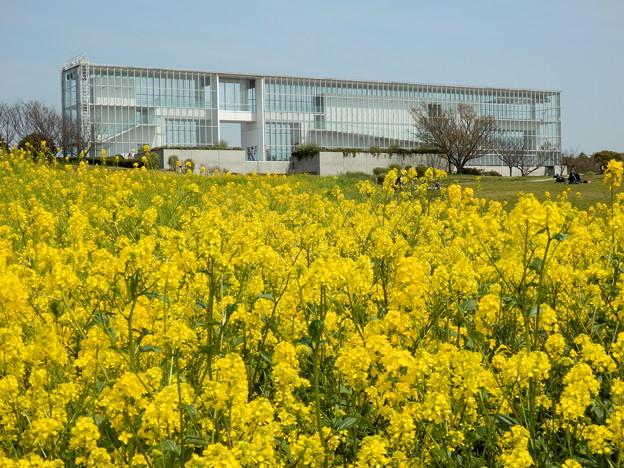菜の花畑から見たクリスタルビュー