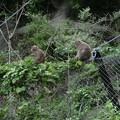 帰りの林道は猿に襲われないかヒヤヒヤものでした^^