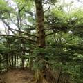 もみの木を撮影していたら・・・