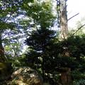 大きな木と朽ちた木のあった場所で・・・