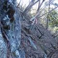 立ってる木の角度がおかしい(笑