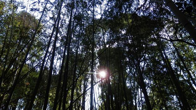 しばし竹林を歩いていると