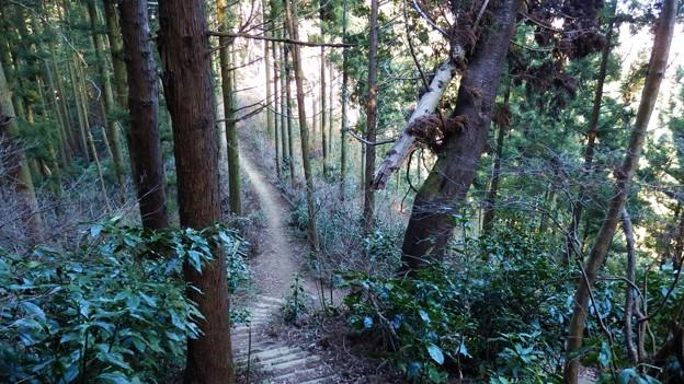 この急な階段を上れば泰光寺山・・・