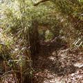 いくつかの笹トンネルを抜けて
