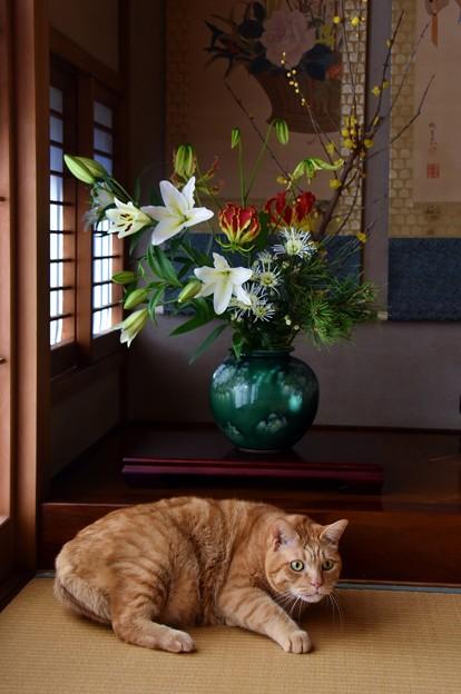 Photos: お正月の花と福嗣