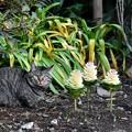 写真: タヌキ猫