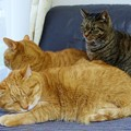 写真: 三猫三様