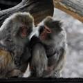 写真: 猿の会話