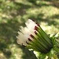 Photos: angel flower
