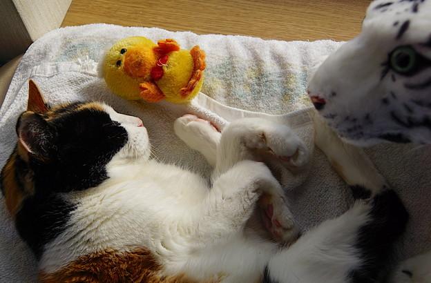 日向で居眠りな三毛猫さん