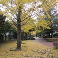 Photos: 黄色のじゅうたんも広がって