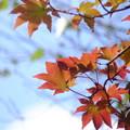 つい先ほど撮影した紅葉