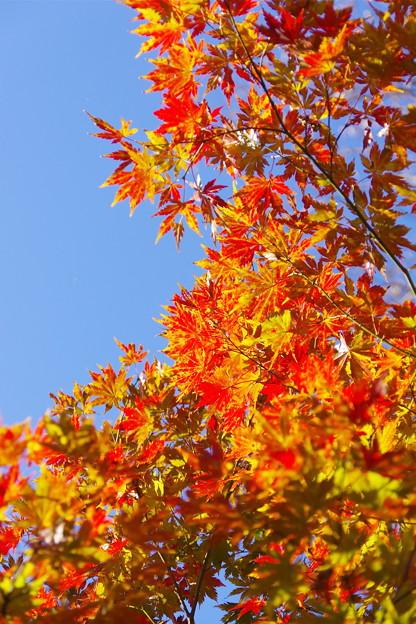 いもり池の紅葉