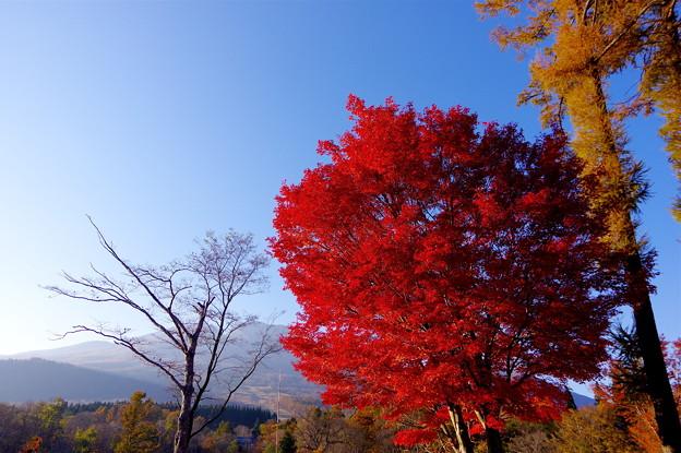 Photos: いもり池最大の紅葉