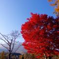いもり池最大の紅葉