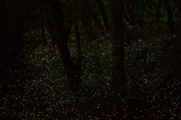 Photos: 夜光の森