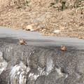 ホオジロさん 2羽 (1) 冬の川辺で