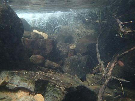 流れ込み付近の水中の様子