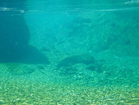 プールの水中の様子