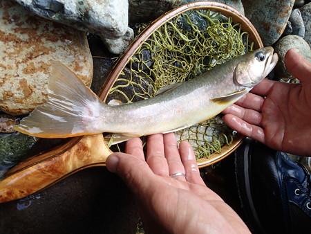 parmarkさんが釣り上げた端正な大岩魚さんのお姿