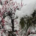 春の湿った雪