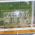 写真: 新潟市西蒲区大曽根の田んぼアート(航空写真)