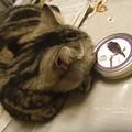 Photos: 猫は完全に飽きている。