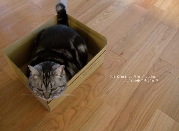 あたしの獲物だったのにー。(不満な猫)