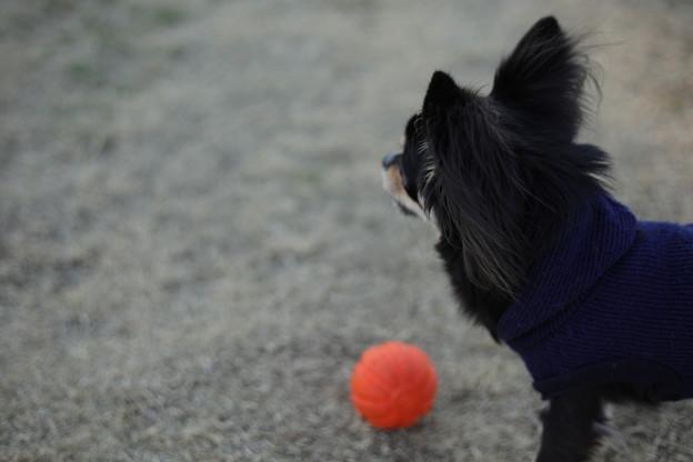 Photos: ボールで遊ぼ