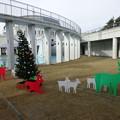 Photos: クリスマスカラーのトナカイ