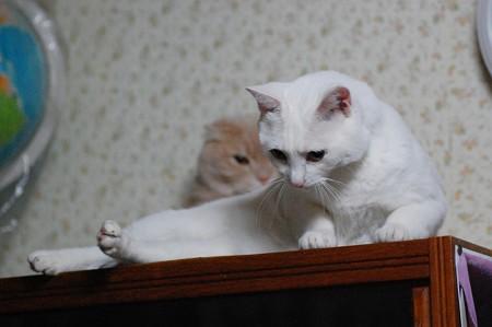 2016年10月12日のシロちゃん(メス3歳)