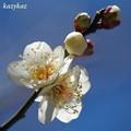立春<匂い立つ>