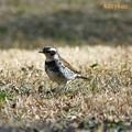 Photos: 芝生にて