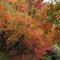 湯出神社の紅葉