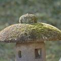 写真: 苔の笠
