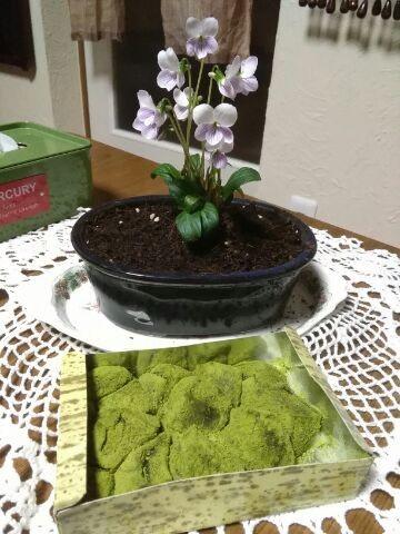 藤菜美のわらび餅