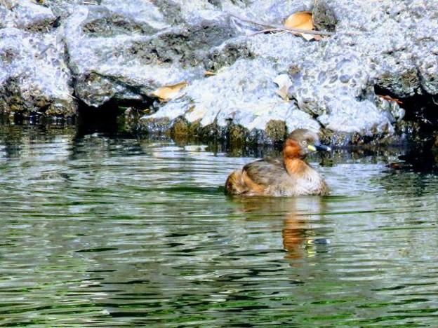 新宿御苑で出会った鳥